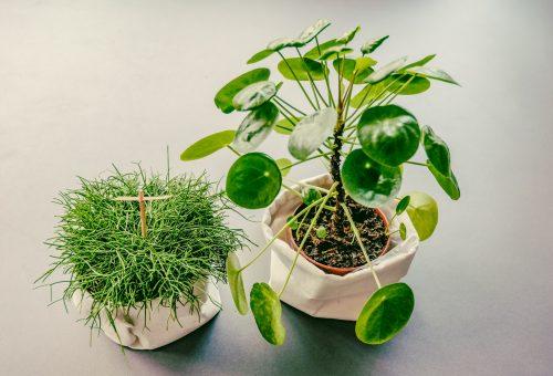 Zet planten in groepjes bij mekaar.